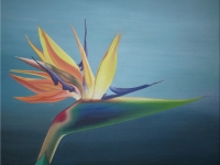 bird-of-paradiselg