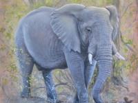 elephant-mma-small