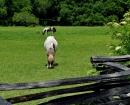 MagnoliaPlantation Ponies