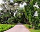 MagnoliaPlantation Road3 copy