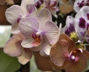 flower-orchids