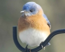 nature-blue-bird-profile