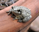 nature-little-toad
